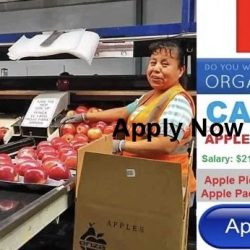 Packer Jobs in Canada | Exciting Fruit & Food Packing Openings